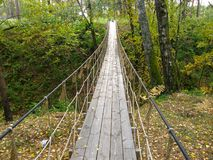 Suspension bridge in the forest. Royalty Free Stock Image