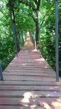 Suspension bridge. Hanging bridge, Board Royalty Free Stock Photo