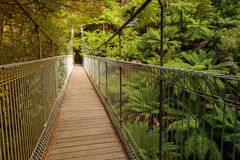 Free Suspension Bridge In Forest Stock Images - 70778594