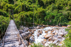 Suspension Bridge in Jungle Stock Photography
