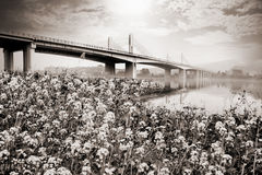 Suspension bridge landscape in monochrome Royalty Free Stock Photography