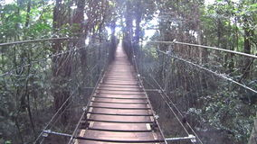 Suspension Bridge 2. Moving shot on a suspension bridge high off the ground in a rainforest stock video footage