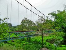 Suspension  bridge over the creek in the forest Royalty Free Stock Images
