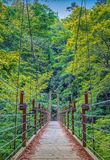 Suspension bridge over the river in forest royalty free stock images