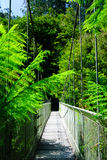 Suspension bridge rainforest Royalty Free Stock Image