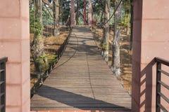 Suspension bridge, rope bridge in forest Stock Photos
