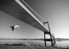 Suspension bridge and swan Stock Photos