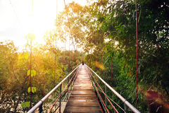 Suspension bridge in a tropical forest at sunset. Stock Images