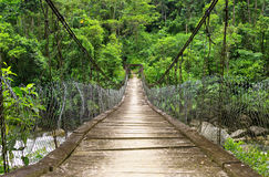 The suspension foot bridge in the jungle of Ecuador Royalty Free Stock Images