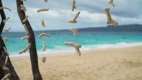 Suspension of sea corals. stock video footage