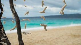 Suspension of sea corals. stock footage