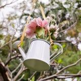 A suspensão das flores e a lata molhando decoram no jardim Imagens de Stock