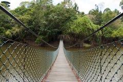 Suspention bridge. In the rainforest Royalty Free Stock Image