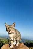 Suspicious cat portrait Stock Image