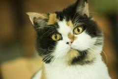Suspicious cat portrait Stock Photos