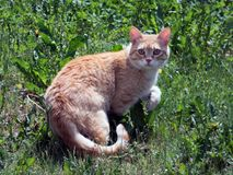 The suspicious cat. Cat in green grass Stock Photo