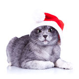 Suspicious little santa cat Stock Photos