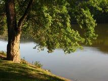 Susquehanna River. By Owego Summer evening Stock Image