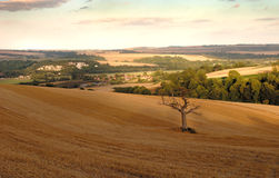 The sussex downs Stock Photography