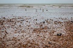 Sussex Nabrzeżny krajobraz zdjęcia royalty free