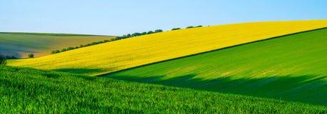 Sussex Rolling Hills con los modelos y los colores del crecimiento de cosechas en los campos grandes foto de archivo libre de regalías