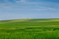 Sussex sommarlandskap arkivfoto