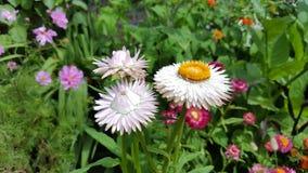 Sussex trädgårdblommor Arkivfoton