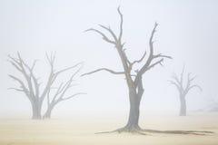 Sussusvlei Deadvlei - Намибия стоковая фотография rf