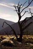 Sussusvlei Deadvlei - la Namibie Photos stock