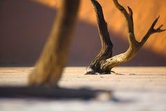Sussusvlei Deadvlei - la Namibie Photographie stock libre de droits