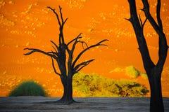 Sussusvlei Deadvlei, Namibia - Zdjęcia Royalty Free