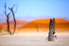 Sussusvlei Deadvlei, Namibia - Obrazy Stock