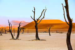 Sussusvlei Deadvlei - Namibia. Dead acacia tree in Sossusvlei and Deadvlei pan - Namibia Stock Image