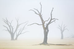 Sussusvlei Deadvlei - Namibia Royalty Free Stock Photography