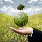 Sustainable agriculture business. Concept background Royalty Free Stock Photos