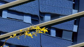 Sustainable city. Modern sustainable city in spring, with a closeup of a branches of a tree full of new leaf buds, moved by the breeze and a reflected building stock video footage