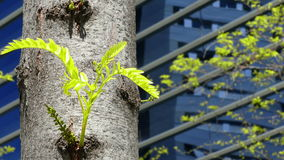 Sustainable city. stock video footage
