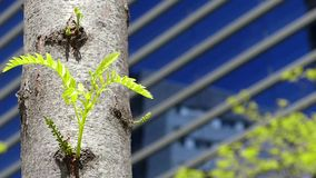 Sustainable city. stock footage