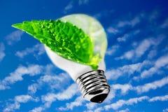 Sustainable development, leaf from lightbulb. Ecology: metaphor of leaf inside lightbulb Royalty Free Stock Image