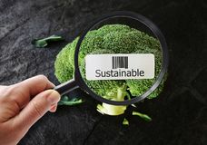 Sustainable food concept Royalty Free Stock Image