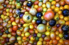 Sustainable Tomato Farming in South Florida. Sustainable farm in Indiantown, FL producing tomatoes, peppers, kale and lettuces. Using organic practices and water stock photography