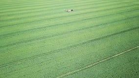 Sustancias químicas de rociadura de la maquinaria agrícola de la visión aérea en el campo verde grande almacen de video