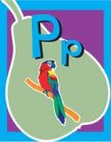 Sustantivos de la letra P de tarjeta de destello. Imagenes de archivo