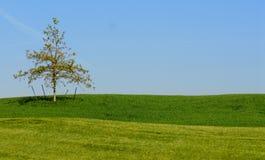 Sustentação da árvore Fotos de Stock Royalty Free