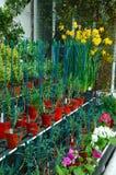 Sustentações da planta Fotografia de Stock