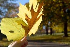 Sustentando as folhas amarelas fotografia de stock