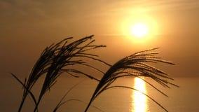 Susuki und sinkende Sonne stock video footage