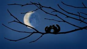 Susurros en el claro de luna Imagen de archivo libre de regalías