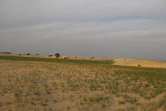 susząca bieląca pustynia grass niektóre wiosna kamieni słońce Zdjęcia Royalty Free