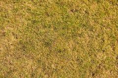Suszę burnt nieżywej trawy na mocno suchej glinie, naturalny tło Fotografia Stock